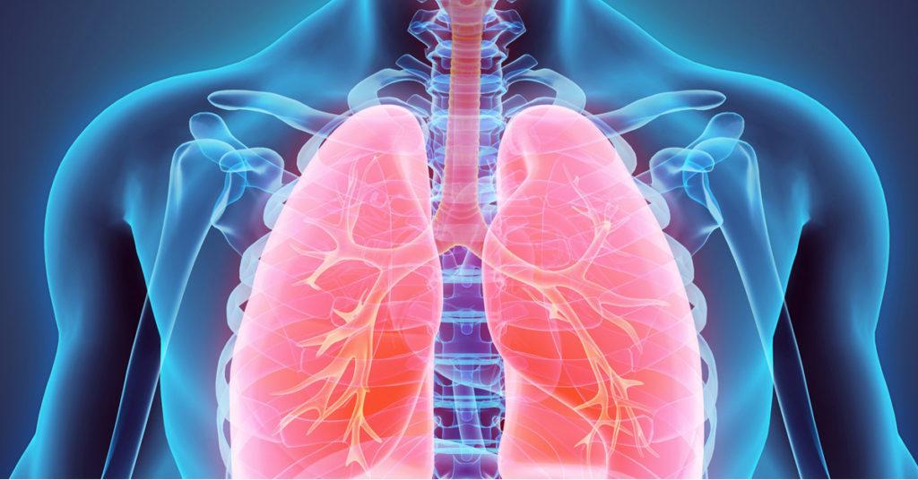 Fisiologia respirazione