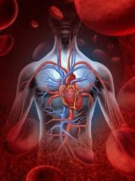 benefici sistema cardiovascolare yoga