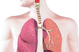benefici sistema respiratorio yoga