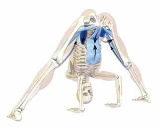 posizione yoga ( asana ) prasarita padottanasana