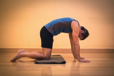 variazione posizione yoga gatto