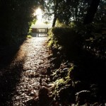 alba energie nel parco