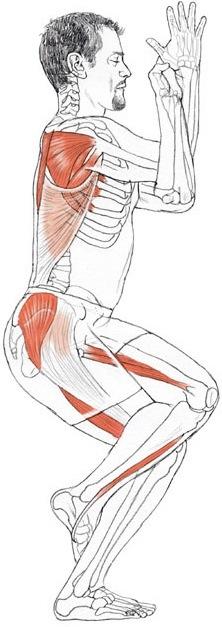 garudasana anatomia