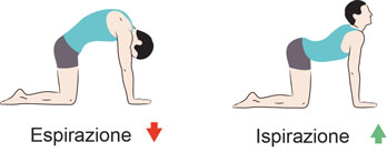 posizione yoga del gatto per eliminare lo stress