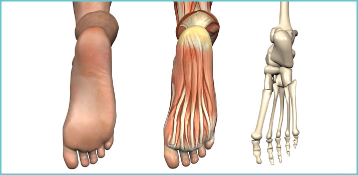 il piede umano