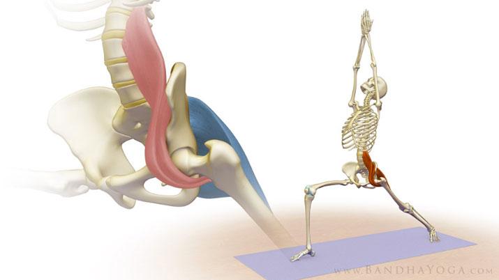 ileopsoas e yoga