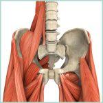 Psoas (ileopsoas), il muscolo dell'anima