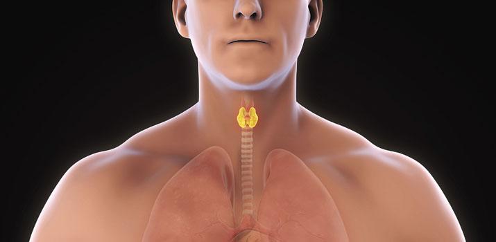 tiroide e le sue funzioni