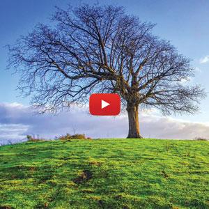 Meditazione albero